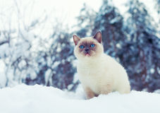 Katt i snö Arkivbild
