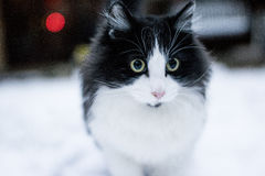 Katt i snöig vinterbakgrund Royaltyfri Fotografi