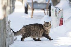 Katt i snön Arkivbild