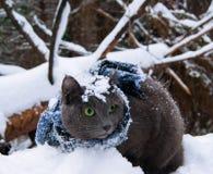 Katt i snön Fotografering för Bildbyråer