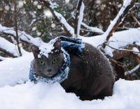 Katt i snön Royaltyfri Foto