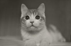 Katt i säng Royaltyfria Bilder