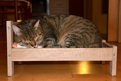 Katt i sängen Arkivbilder