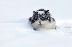 Katt i snow Royaltyfri Foto