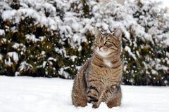 Katt i snow Royaltyfria Foton