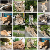 Katt i stad Royaltyfria Foton