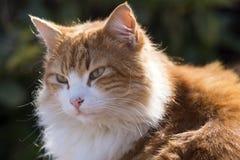 Katt i sunen Arkivbilder