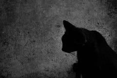 Katt i svartvita halloween Arkivfoton