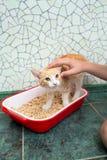 Katt i toaletten Royaltyfri Foto