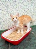 Katt i toaletten Royaltyfria Foton