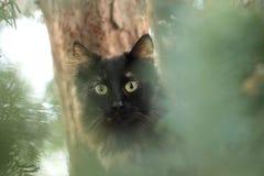Katt i trädet Royaltyfri Fotografi