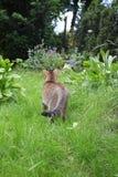 Katt i trädgård Arkivbilder