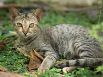 Katt i trädgård arkivfoton