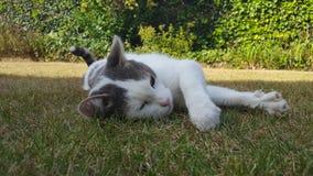 Katt i trädgård Arkivfoto