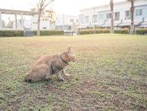 Katt i trädgård i by Arkivbild