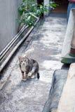 Katt i trädgård som stirrar till dig Royaltyfria Bilder