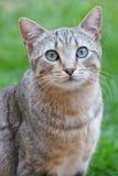 Katt i trädgården Fotografering för Bildbyråer