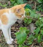 Katt i trädgården Royaltyfria Bilder