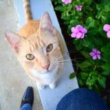 Katt i trädgården Arkivfoto