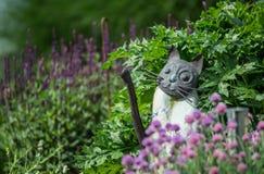 Katt i trädgården som omges av örter arkivbilder