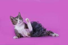 Katt i trendig klänning på en isolerad rosa bakgrund royaltyfri fotografi