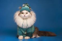 Katt i vinterkläder Arkivbild