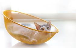 Katt i yellowbasket Royaltyfri Foto