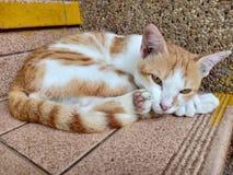 Katt inga sinnesrörelser som spelar royaltyfri fotografi