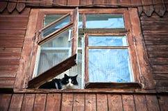 katt inom fönster Arkivbilder