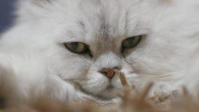 Katt inomhus arkivfilmer