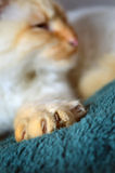 Katt jordluckrare arkivbild