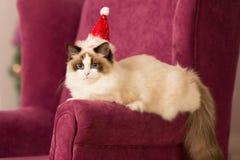 Katt Julparti, katt för vinterferier med gåvaasken nytt år för katt julträd i inre bakgrund Fotografering för Bildbyråer