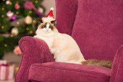 Katt Julparti, katt för vinterferier med gåvaasken nytt år för katt julträd i inre bakgrund Arkivfoto