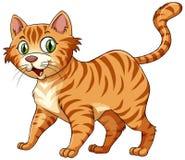 Katt- katt i ingefära royaltyfri illustrationer