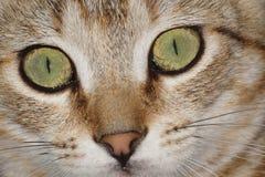 Katt katter, pott arkivfoto