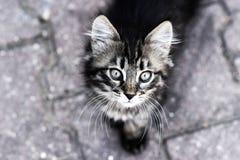 Katt kattunge som ser upp, närbildkattunge, kattögon Royaltyfri Foto