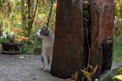 katt little Royaltyfri Fotografi