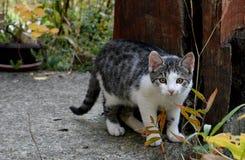 katt little Royaltyfria Foton