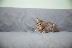 katt little Arkivfoto