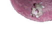 katt little Fotografering för Bildbyråer