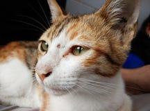 katt little Arkivbild