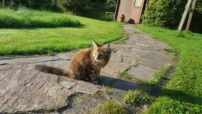 katt little Royaltyfria Bilder