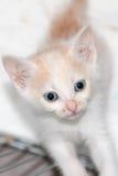 katt little Arkivfoton