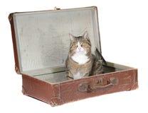 katt little gammal sittande resväska Royaltyfria Bilder