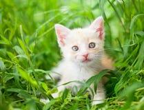 katt little som är röd Fotografering för Bildbyråer