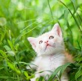 katt little som är röd Royaltyfria Foton