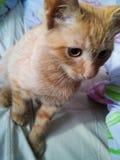 katt little som är röd Royaltyfri Fotografi