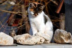 katt little som är SAD Royaltyfri Fotografi