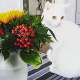 Katt med blommor Arkivbild
