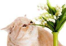 Katt med blommor som isoleras på vit backgroud Royaltyfri Foto